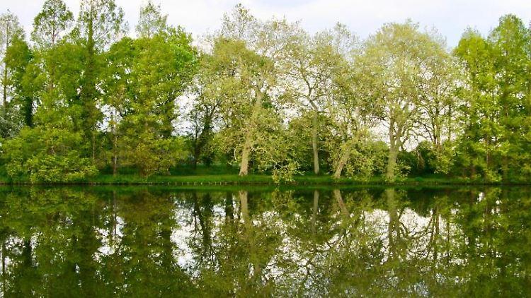 Der Landschaftspark Wörlitz ist zu sehen. Foto: Daniela David/dpa-tmn/Archiv