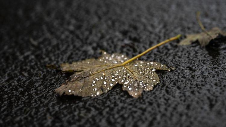 Ein Blatt mit Regentropfen liegt auf einem Weg. Foto: Frank Rumpenhorst/dpa