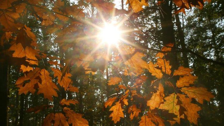 Die Sonne scheint durch das gefärbte Laub der Bäume. Foto: Wolfgang Kumm/dpa/Archivbild