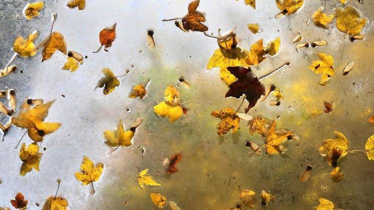 Herbstblätter liegen auf dem durchsichtigem Dach. Foto: Karl-Josef Hildenbrand/dpa/Archivbild