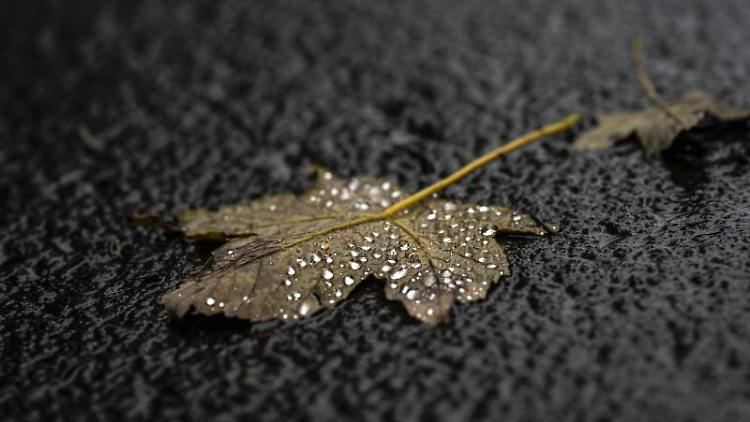 Ein Blatt voller Regentropfen. Foto: Frank Rumpenhorst/dpa/Archivbild