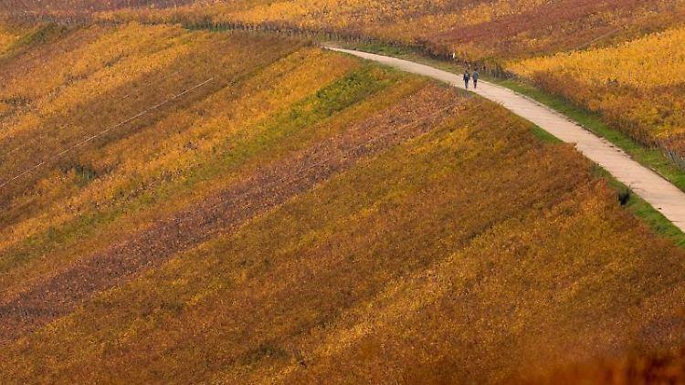 Spaziergänger gehen durch die Hänge der herbstlich verfärbten Weinberge. Foto: Nicolas Armer/dpa/Archivbild