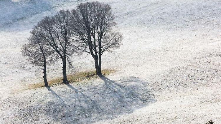 Der Schatten von drei Bäumen zeichnet sich auf einer beschneiten Wiese ab. Foto: Philipp von Ditfurth/dpa/Archivbild