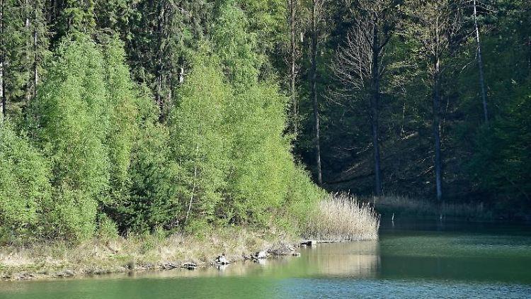 Ausgetrocknete Gräser stehen am Ufer der Ronsdorfer Talsperre. Foto: Caroline Seidel/dpa/Archivbild