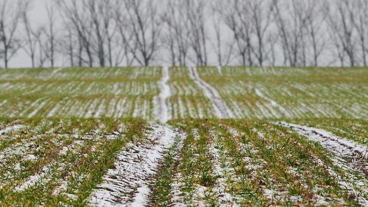 Ein wenig Schnee auf einem Feld in Ahrensfelde. Foto: Annette Riedl/dpa/Archivbild