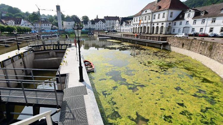 Ein Algenteppich schwimmt in einer Ecke des Bad Karlshafener Hafenbeckens. Foto: Uwe Zucchi/dpa/Archivbild