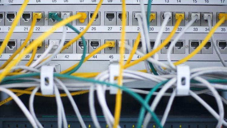 Zahlreiche Netzwerkkabel stecken in einem Büro-Serverschrank. Foto: Jens Büttner/dpa-Zentralbild/dpa/Symbolbild