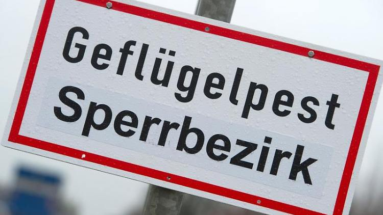 Ein Schild verweist auf einen Geflügelpest-Sperrbezirk. Foto: Stefan Sauer/dpa-Zentralbild/dpa/Symbolbild