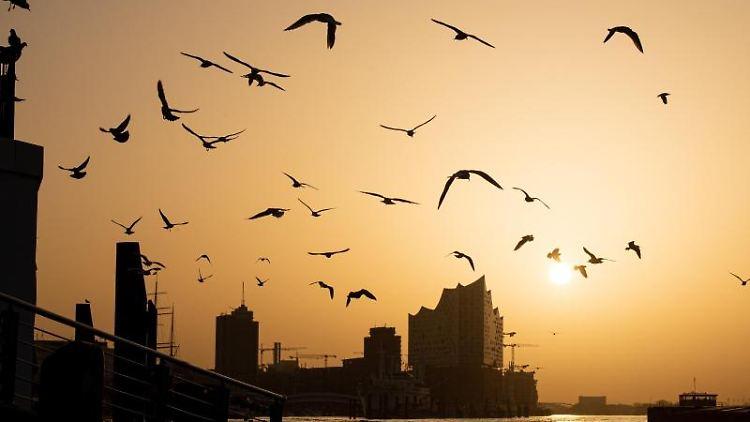 Zahlreiche Vögel fliegen während des Sonnenaufgangs an den Landungsbrücken. Foto: Daniel Reinhardt/dpa