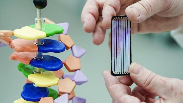 Ein Mitarbeiter hält in einem Sequenzier-Labor am EMBL eine sogenannte Flowcell neben das Modell einer DNA-Helix. Foto: Uwe Anspach/dpa