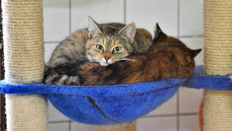 Zwei Katzen haben es sich in einem Zimmer im Tierheim gemütlich gemacht. Foto: Martin Schutt/dpa-Zentralbild/dpa