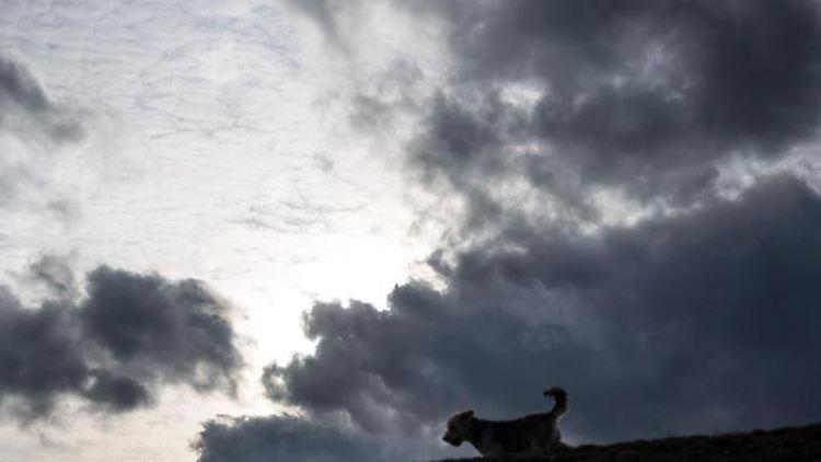 Ein Hund zeichnet sich vor Sonne und Wolken am Himmel ab. Foto: Bernd Thissen/dpa/Symbolbild