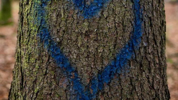 Ein gemaltes Herz ist auf einem Baum im Dannenröder Forst zu sehen. Foto: Silas Stein/dpa/Symbolbild