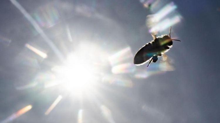 Vor der strahlenden Sonne fliegt eine Biene. Foto: Frank Rumpenhorst/dpa/Archivbild