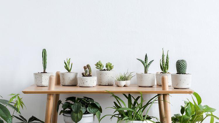 Blumentöpfe: Welcher Übertopf eignet sich für welche Zimmerpflanze?