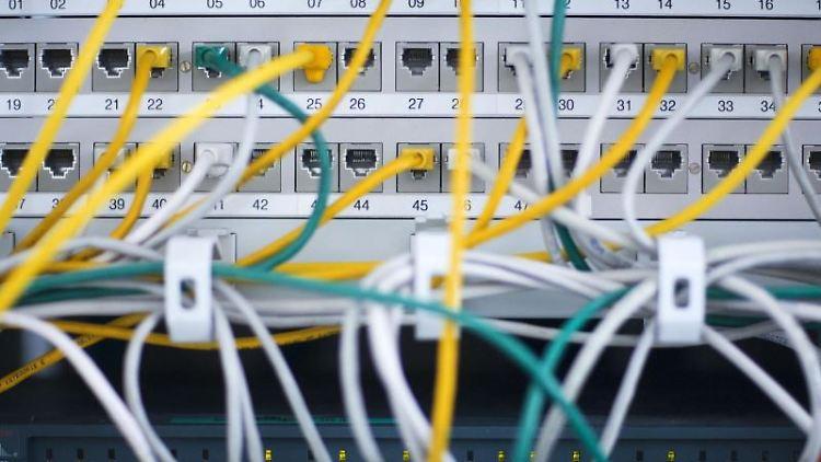 Zahlreiche Netzwerkkabel stecken in einem Büro-Serverschrank. Foto: Jens Büttner/dpa-Zentralbild/dpa/Archivbild