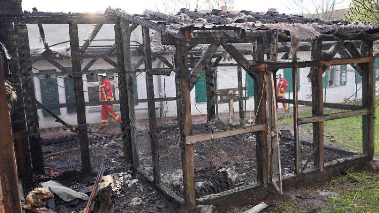 Eine Stallanlage ist in der Domäne Dahlem abgebrannt. Foto: Jörg Carstensen/dpa