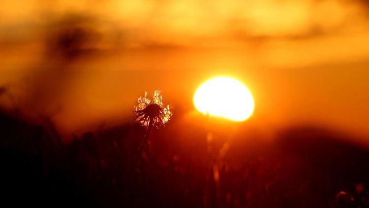 Eine Pusteblume steht im Sonnenaufgang auf einer Wiese. Foto: Karl-Josef Hildenbrand/dpa