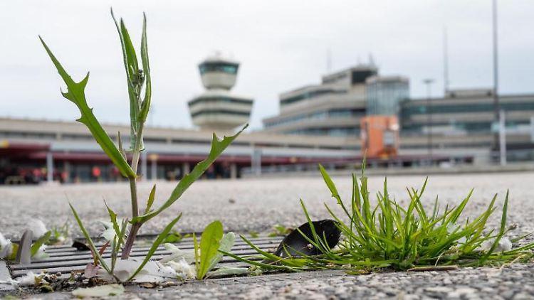 Auf einer Straße auf dem ehemaligen Flughafen Tegel wachsen Pflanzen aus einem Gully. Foto: Christophe Gateau/dpa