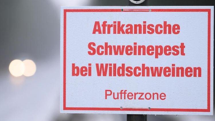 Ein Schild, das auf die Schweinepest hinweist, steht auf einer Straße. Foto: Sebastian Kahnert/dpa-Zentralbild/dpa/Archivbild