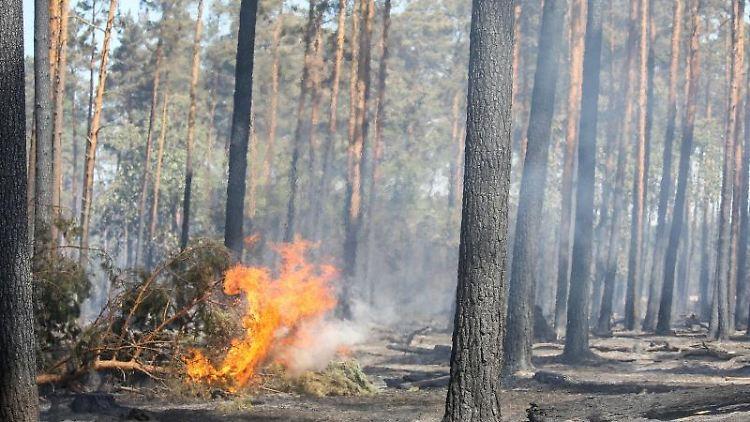 Letzte Feuer lodern nach einem Waldbrand. Foto: Jan Woitas/zb/dpa/Archiv