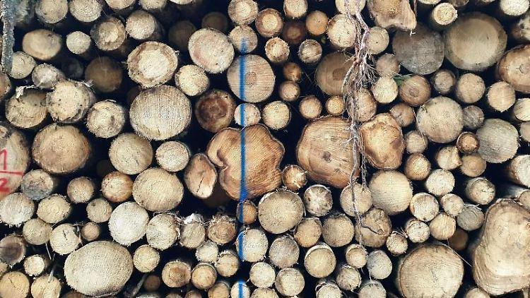 Gestapelt liegen geschädigte Baumstämme, zumeist Fichten, im Wald. Foto: Carolin Eckenfels/dpa/Symbolbild