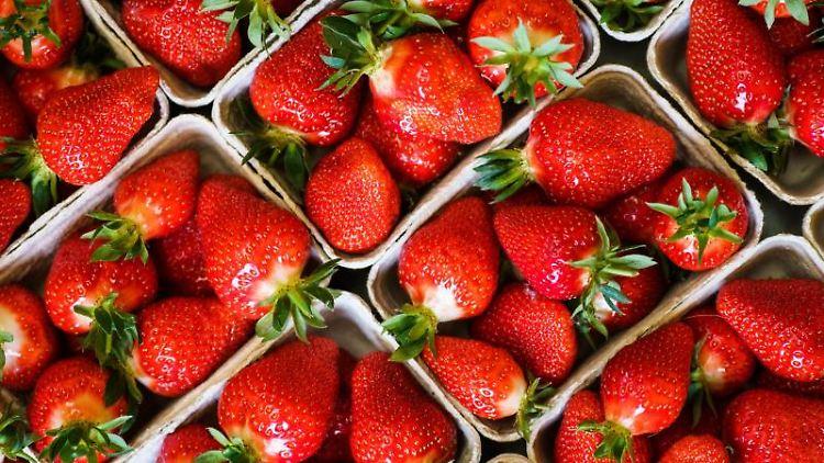 Geerntete Erdbeeren liegen in Körbchen. Foto: Andreas Arnold/dpa/Symbolbild