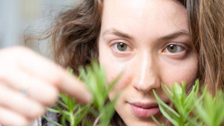 Valeria Bobke, Masterstudentin Biologie, inspiziert die Stromtalpflanze Echter Steinsame. Foto: Sebastian Kahnert/dpa-Zentralbild/dpa