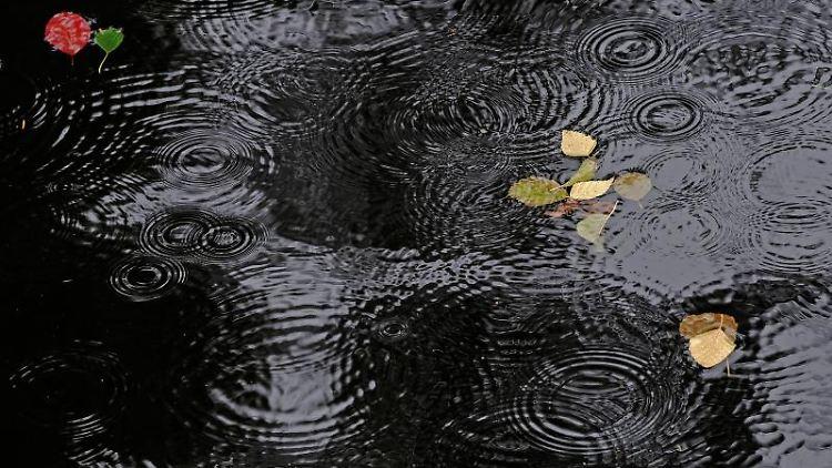 Regentropfen erzeugen Ringe auf einer Wasseroberfläche. Foto: Paul Zinken/dpa/Symbolbild