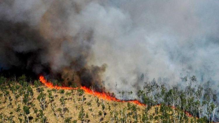 Blick auf eine Rauchwolke während eines Waldbrandes im Loben-Moor zwischen Gorden-Staupitz, Hohenleipisch und Plessa. Foto: Veit Rösler/dpa-Zentralbild/dpa/Archivbild