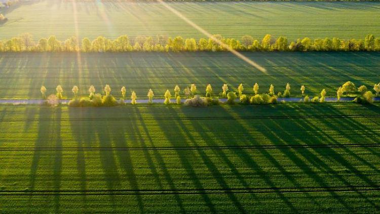Bäume werfen in der Morgensonne lange Schatten auf ein Feld. Foto: Jan Woitas/dpa-Zentralbild/dpa/Symbolbild