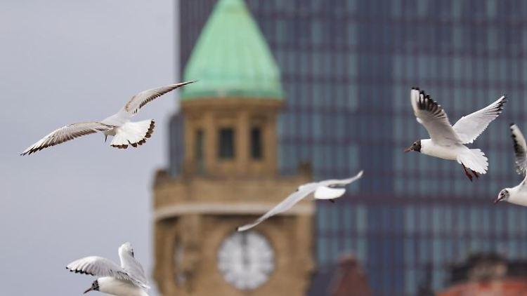 Möwen fliegen über die Landungsbrücken in Hamburg. Foto: Ulrich Perrey/dpa/Symbolbild