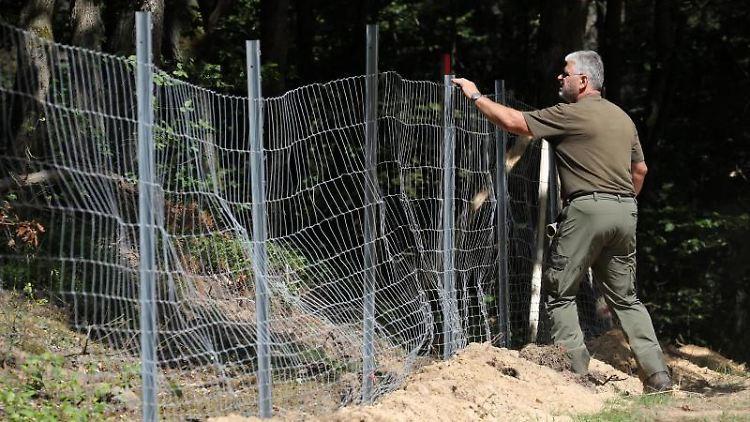 Grenzzaun gegen die Afrikanische Schweinepest. Foto: Bernd Wüstneck/dpa-Zentralbild/dpa/Archiv
