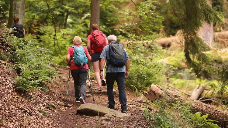 Wanderer sind unterwegs. Foto: Matthias Bein/dpa-Zentralbild/ZB/Symbolbild