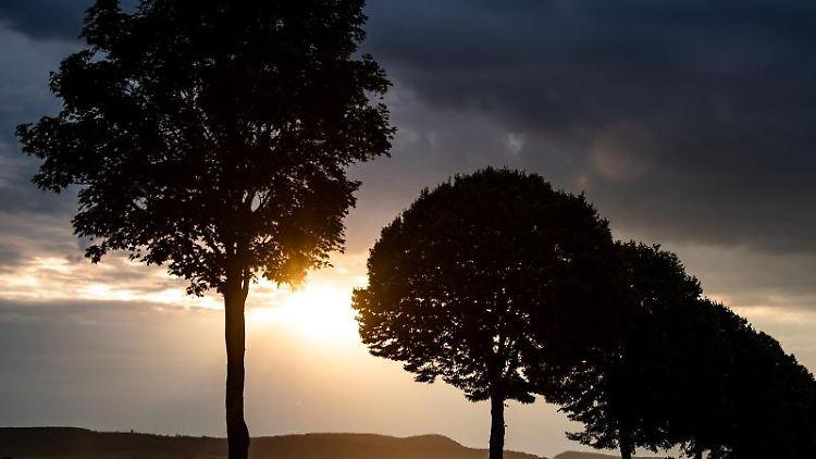 Die Sonne scheint am frühen Morgen hinter einer Allee und Wolken. Foto: Swen Pförtner/dpa