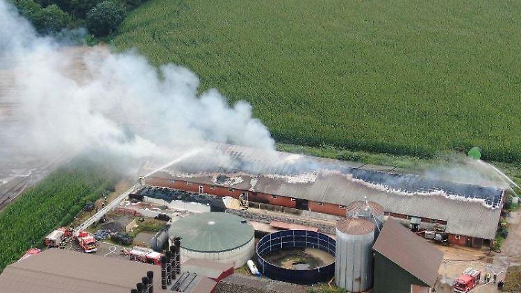 Rauch steigt über einem Schweinestall auf, der in Brand geraten war. Foto: ---/Nord-West-Media/dpa