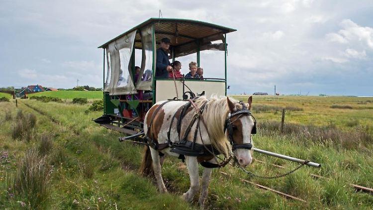 Die Pferdebahn auf Spiekeroog fährt auf ihrer Tour durch die typische Landschaft der Nordseeinseln. Foto: picture alliance/Ingo Wagner/dpa/Archivbild