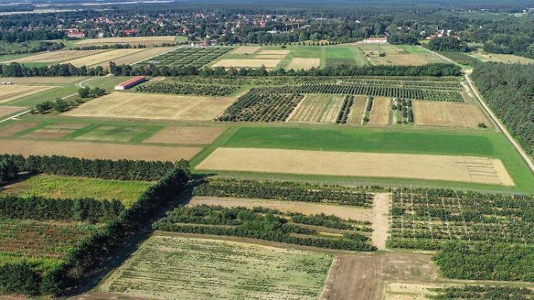 Blick über das Gelände des Leibniz-Zentrums für Agrarlandschaftsforschung (ZALF). Foto: Patrick Pleul/dpa-Zentralbild/ZB/Archivbild