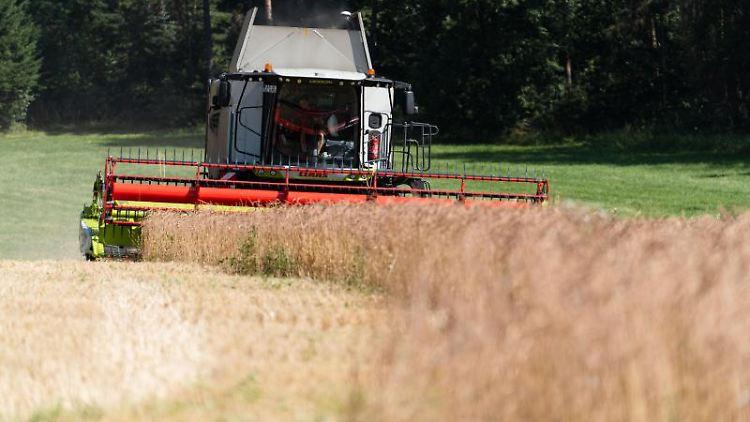 Ein Landwirt bearbeitet mit dem Mähdrescher ein Bio-Dinkel-Feld. Foto: Nicolas Armer/dpa