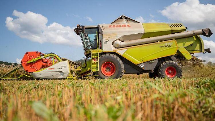 Ein Landwirt fährt bei der Getreideernte mit seinem Mähdrescher über ein Haferfeld. Foto: Christoph Schmidt/dpa/Symbolbild