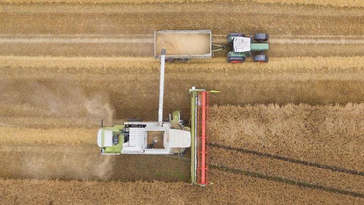 Ein Mähdrescher erntet Getreide auf einem Feld. Foto: Friso Gentsch/dpa/Symbolbild