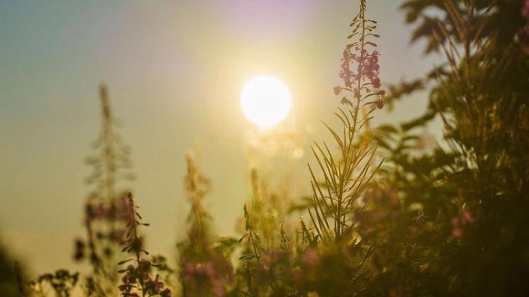 Die Sonne geht über dem Feldbergplateau auf. Foto: Andreas Arnold/dpa/Archivbild