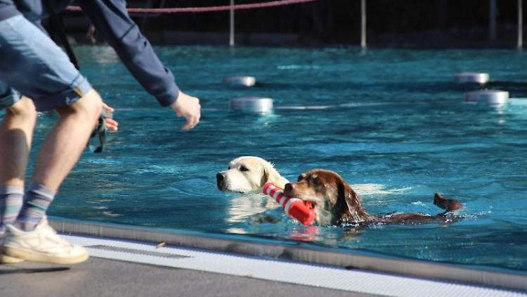 Zwei Hunde schwimmen im Schwimmbecken. Foto: Sascha Thelen/TNN/dpa
