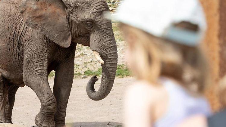 Ein Kind bestaunt eine Elefantenkuh im Zoopark Erfurt. Foto: Michael Reichel/dpa-Zentralbild/dpa
