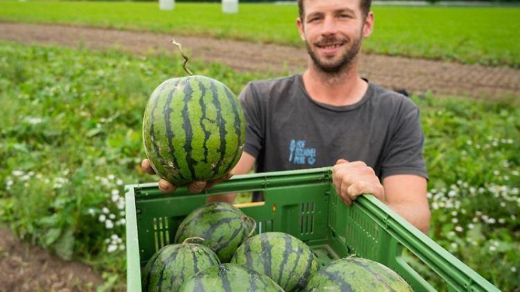 Benjamin Rickert, Landwirt, hält eine Wassermelone in der Hand. Foto: Philipp Schulze/dpa