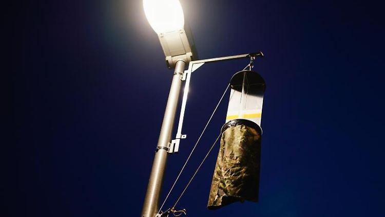 Eine Flugfensterfalle zum Fang von Insekten hängt an einem Laternenmast. Foto: Uwe Anspach/dpa