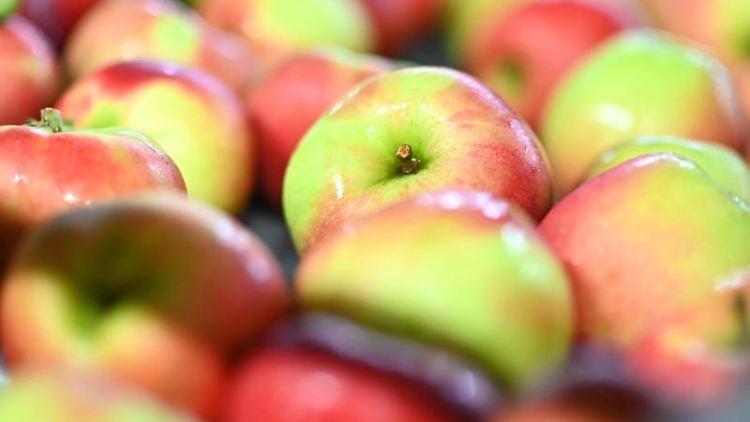 Äpfel liegen in einer Obstkiste. Foto: Felix Kästle/dpa/Symbolbild