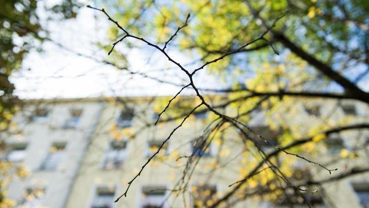 An dem Ast eines Baumes sind keine Blätter mehr. Foto: picture alliance / dpa/Archivbild