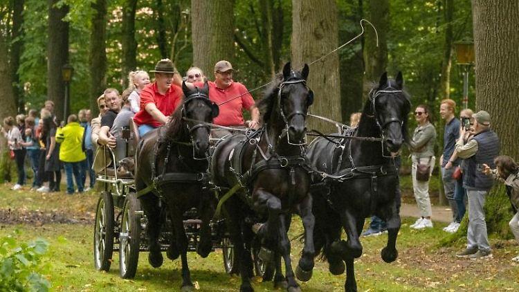 Eine Kutsche fährt die Allee am Schloss Clemenswerth entlang. Foto: Markus Hibbeler/dpa