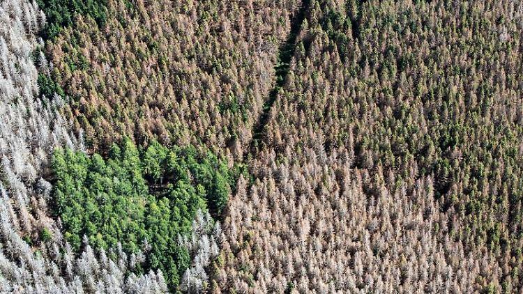 Blick auf den Nationalpark Harz mit teilweise abgestorbenen Fichten. Foto: Swen Pförtner/dpa/Archivbild